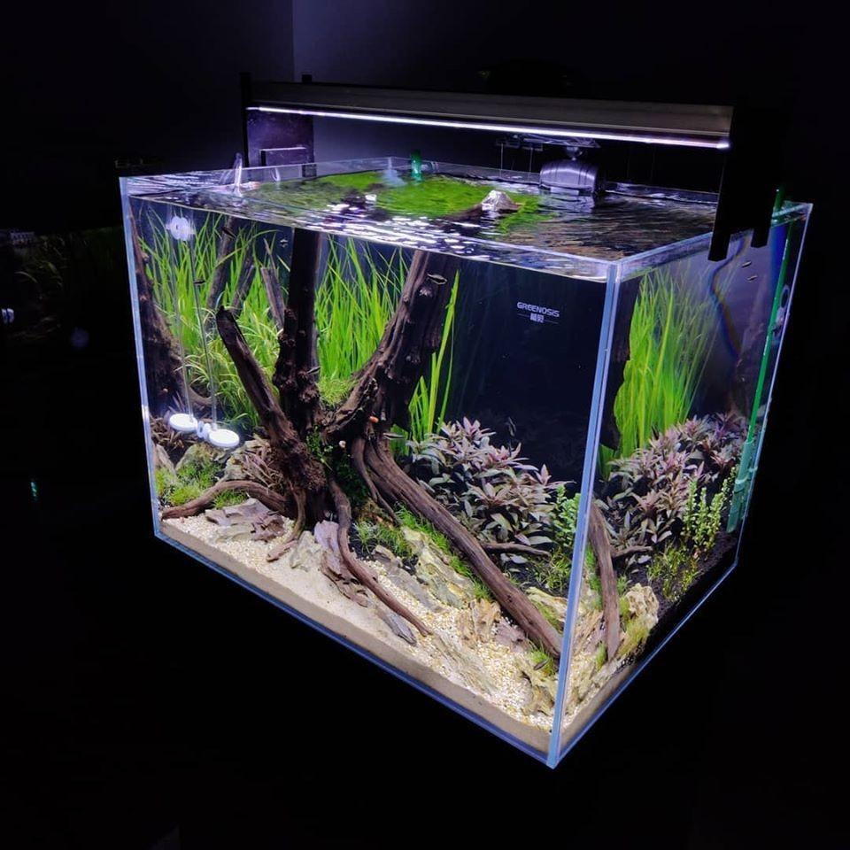 Planted Aquarium In Chennai India Planted Tank Aquascape